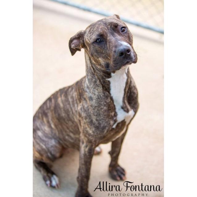 Photo of Delilah (Pcc 372)