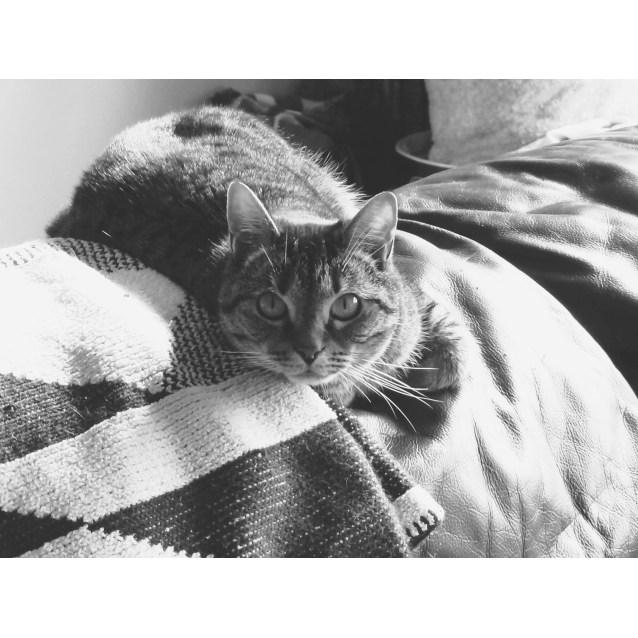 Photo of Minxie Cat