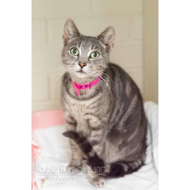 Photo of Cosette (2741)