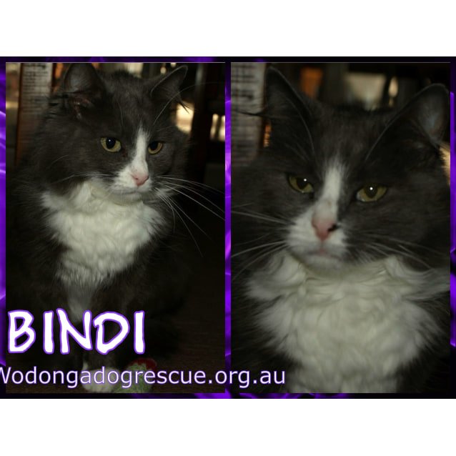 Photo of Bindi