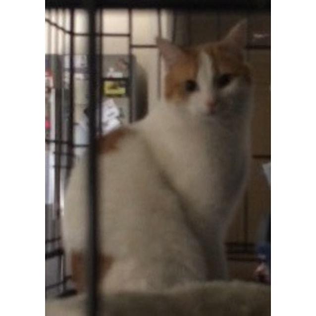 Photo of Amber | $50 Adoption Fee