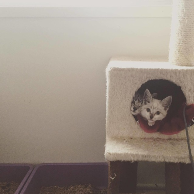 Photo of Ash