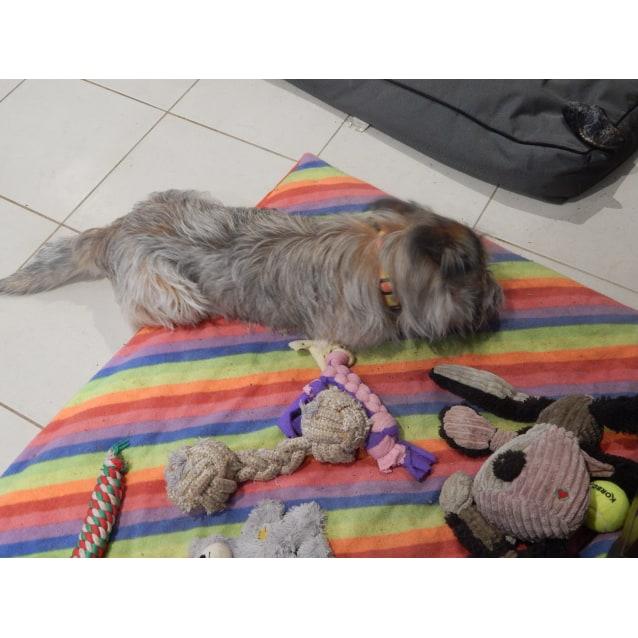 Photo of Tarco