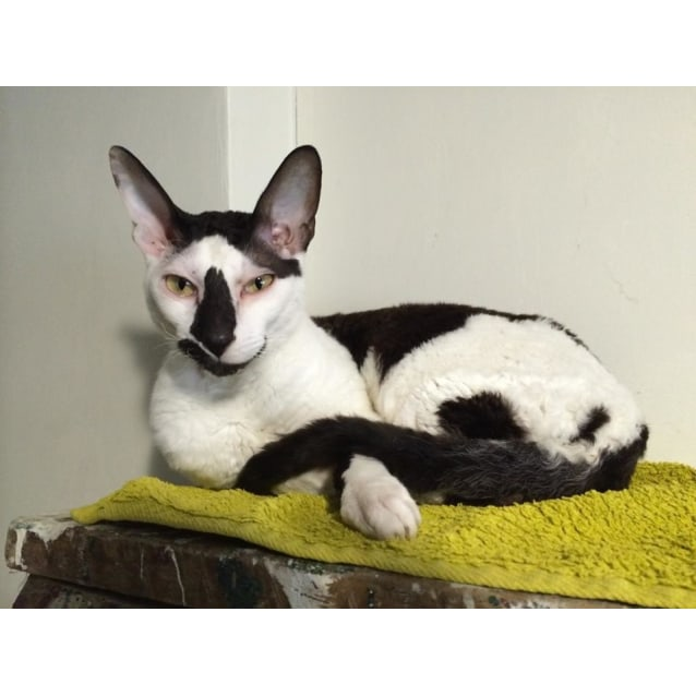 Photo of Ziggy (Located In Bayswater)