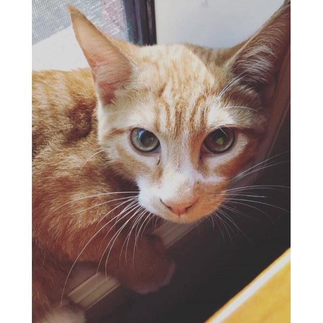 Photo of Tybalt