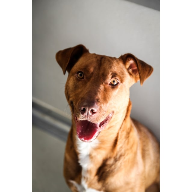 Photo of Barney (2847)