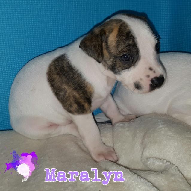 Photo of Maralyn