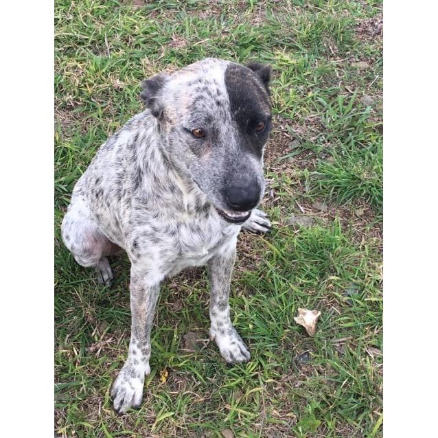 Photo of Shay (Adoption Pending)