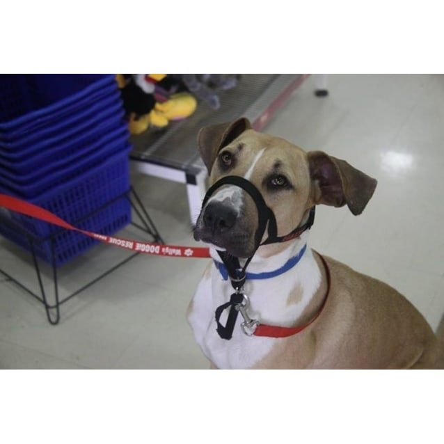 Photo of Ellie (Dog Friendly)