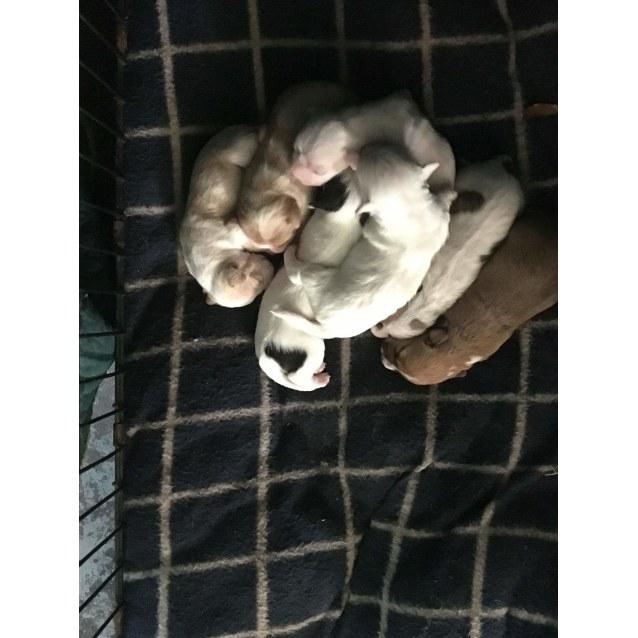 Photo of Territory Terriers