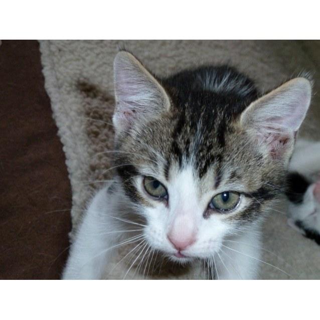 Photo of Agassi *Sydney Animal Rescue Inc.*