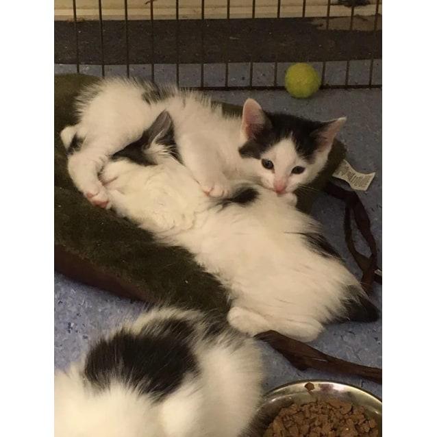 Photo of Beautiful Kittens