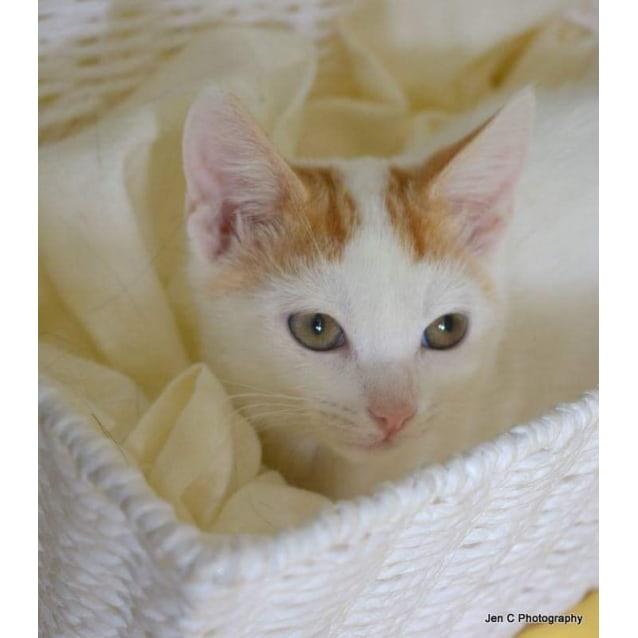 Photo of Marmalade  **A Special Princess **