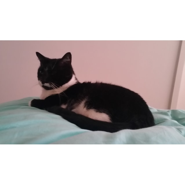 Photo of Akira (Located In Armadale)