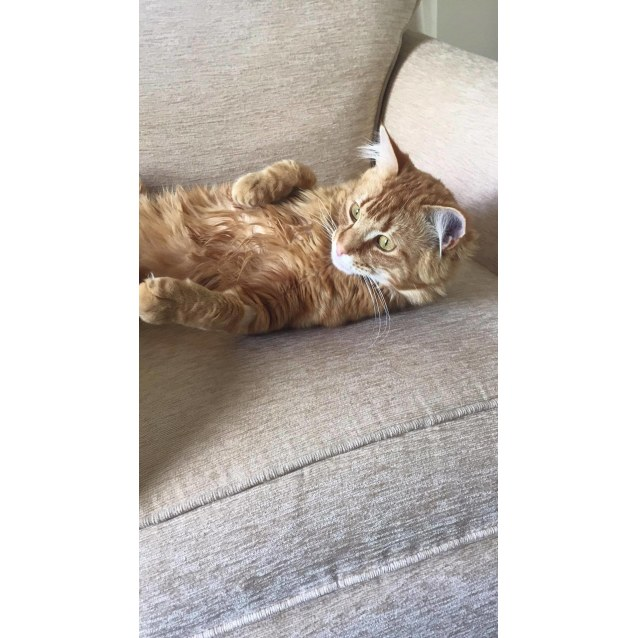 Photo of Leo