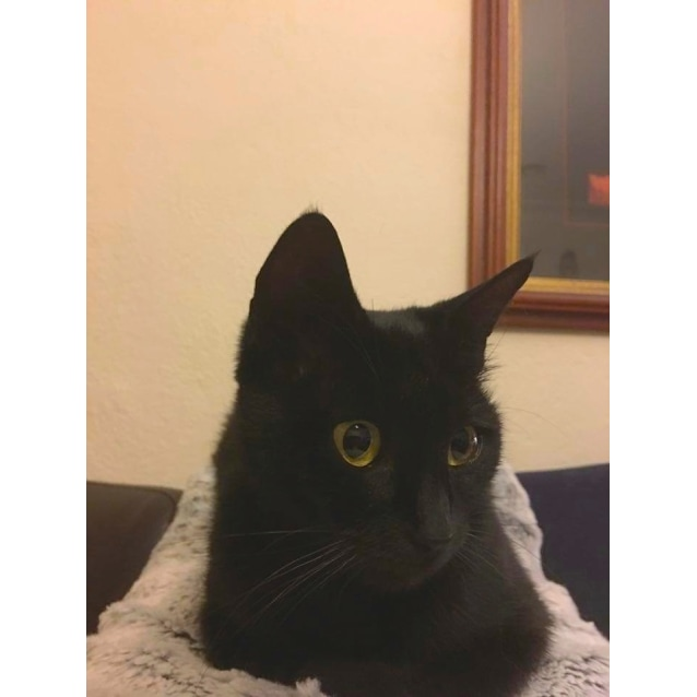 Photo of Ivy (Located In Elsternwick)