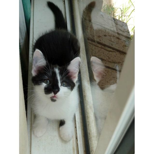 Photo of Martina *Sydney Animal Rescue Inc.*