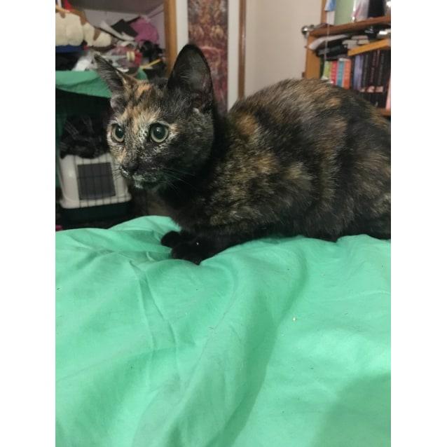 Photo of Minnie (Located In Highett)