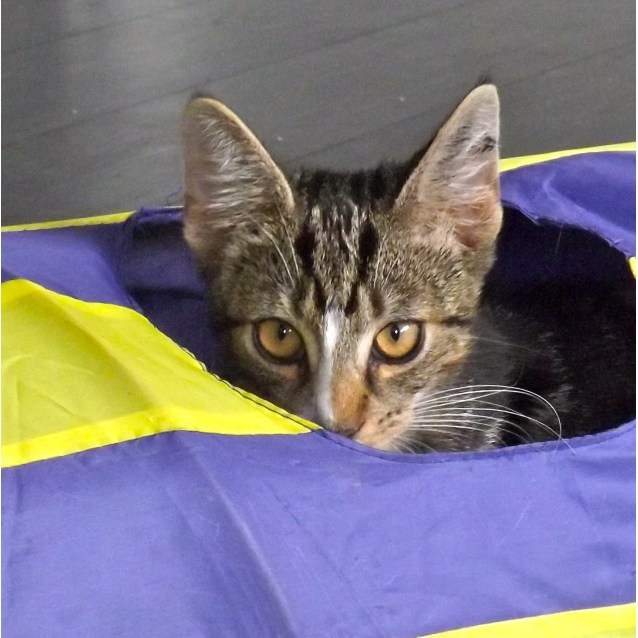 Photo of Berlioz (Located In Diggers Rest)