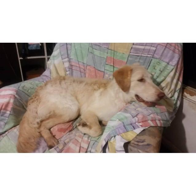 Photo of Baxter (Adoption Pending)
