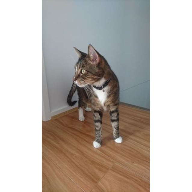 Photo of Tiger (Located In Footscray)