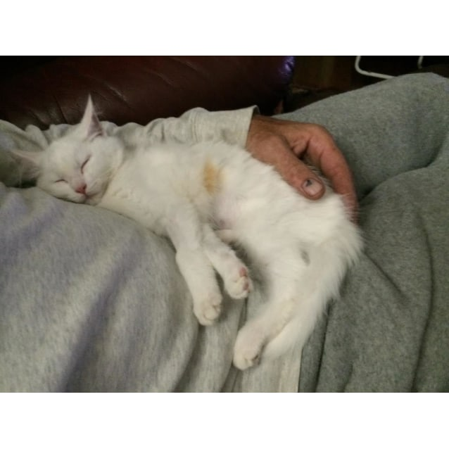 Photo of Marshmallow (Located In Bayswater)
