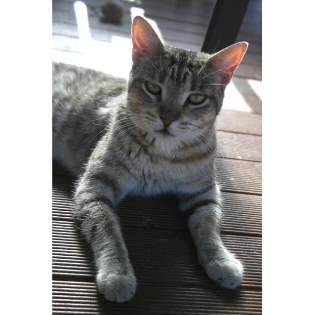 Photo of Khleo