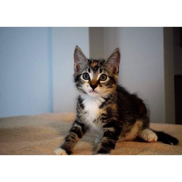 Photo of Audrey