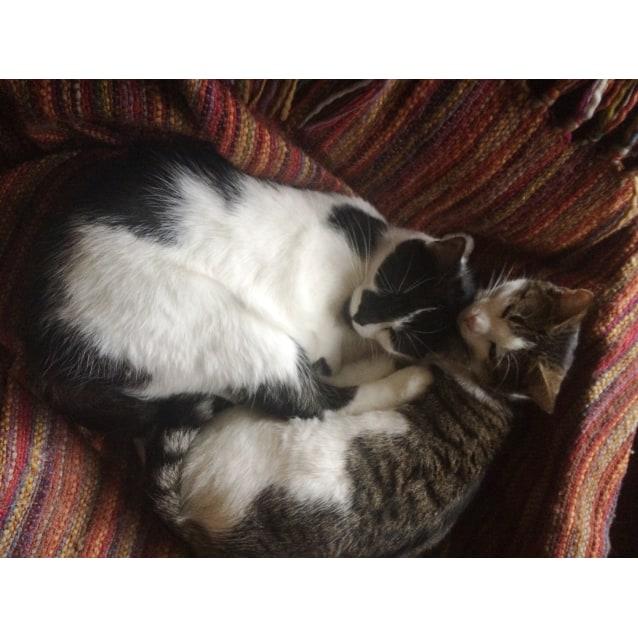 Photo of Zebedee & Peanut~A Love Story