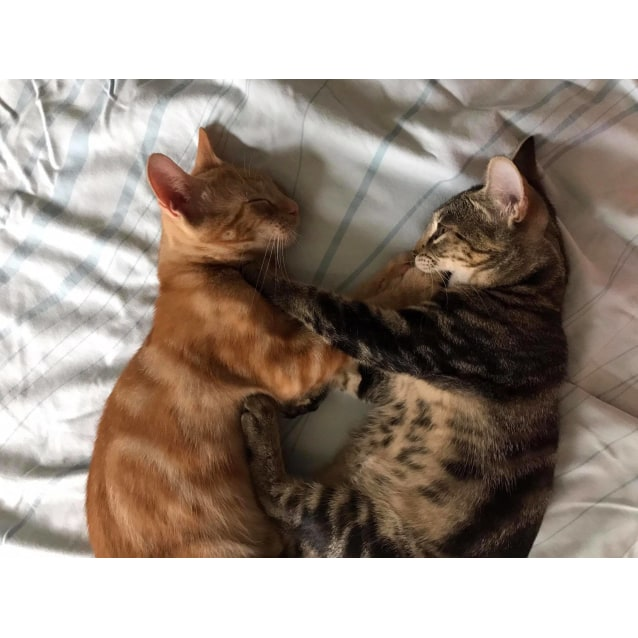 Photo of Petey & Boo