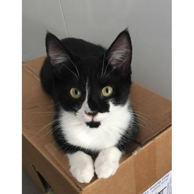 Photo of Maisy (Located In Alphington)