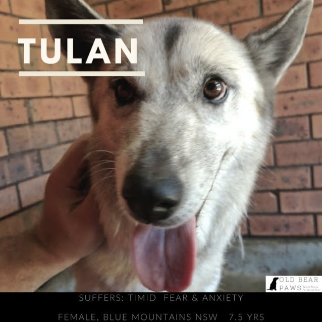 Photo of Tulan