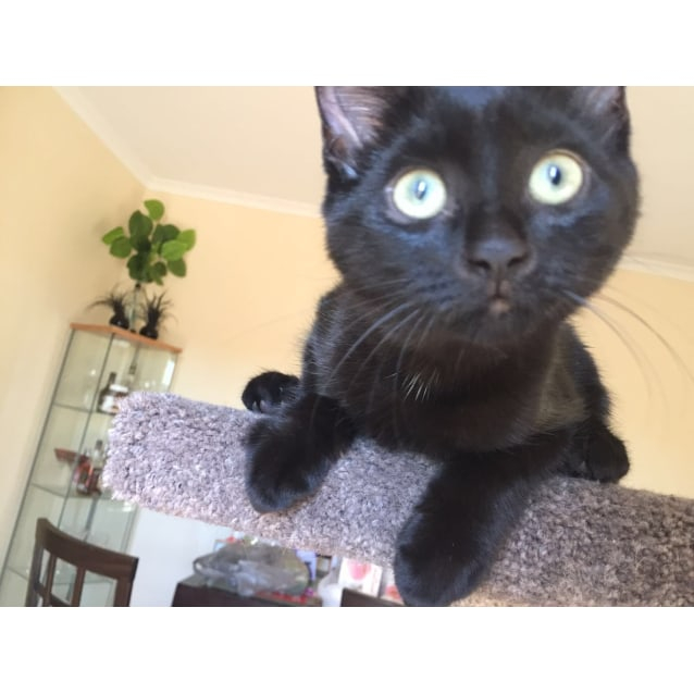 Photo of Pepper (Located In Frankston)
