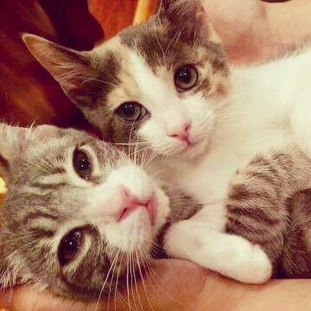 Photo of Hazel & Brother Finn (Reservoir)