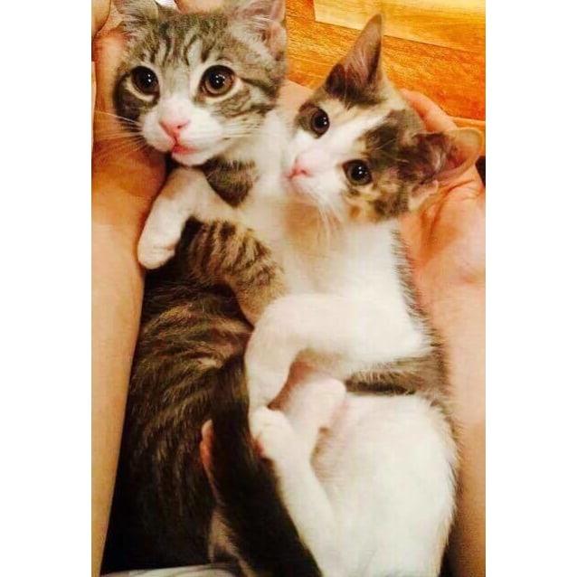 Photo of Finn & Sister Hazel  (Reservoir)