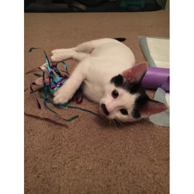 Photo of Crazy Connie!