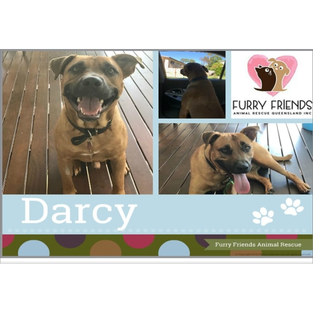 Photo of Darcy