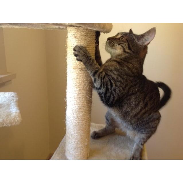 Photo of Lucy (Meet Me At The Catz Pyjamas   Brunswick)