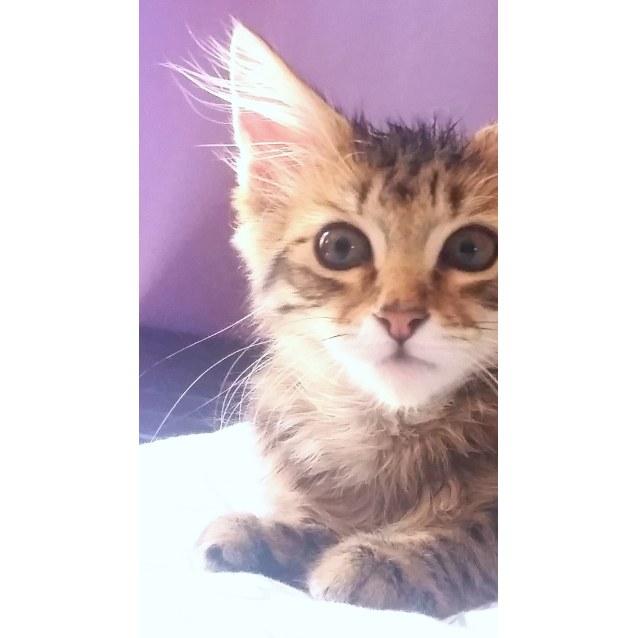 Photo of Freddie The Fearless Feline