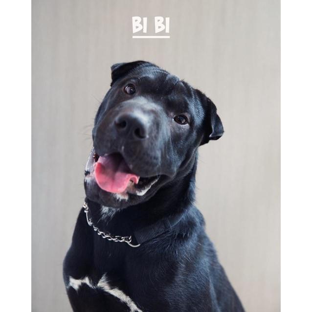 Photo of Bi Bi