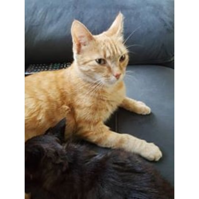 Photo of Katherine Hepburn ** 2nd Chance Cat Rescue**