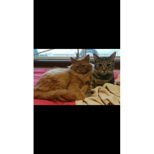 Photo of Bailey&Dexter