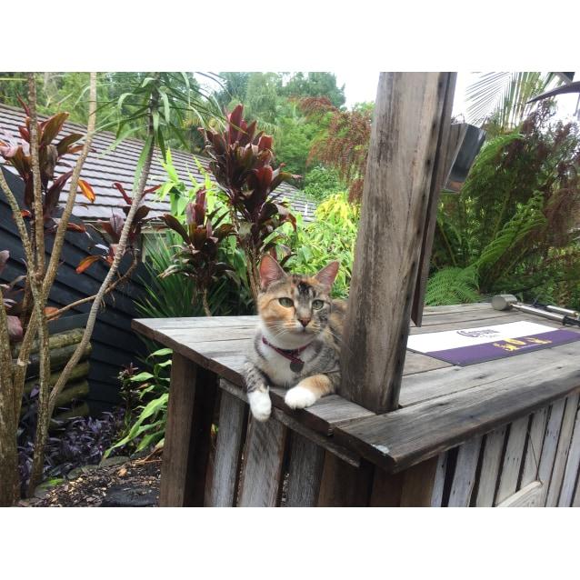 Photo of Penny @ The Pet House, Tuggerah