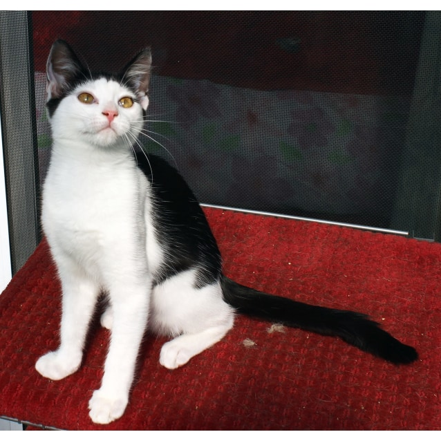 Photo of Montana **2nd Chance Cat Rescue**