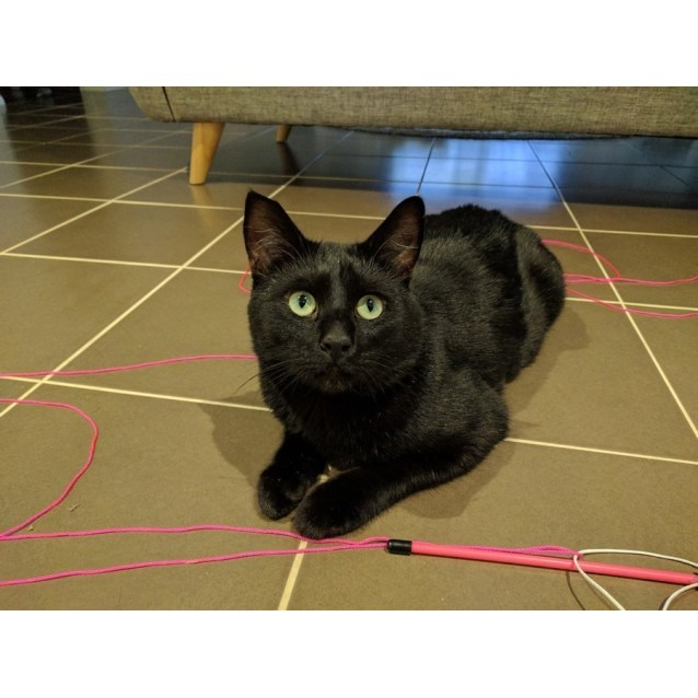 Photo of Blackie Chan