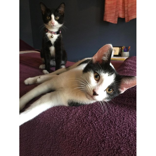 Photo of Polly (F) & Percy (M) 🐱