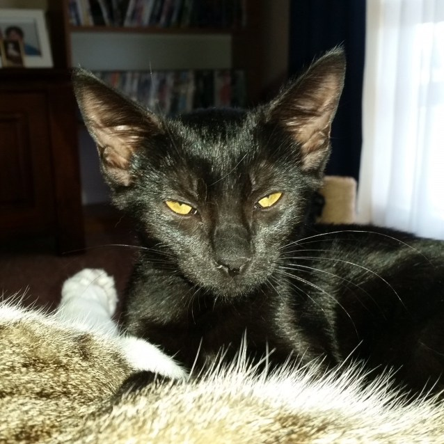 Photo of Billie (Ac0013)