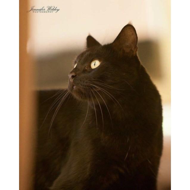 Photo of Ac0023   Sampson
