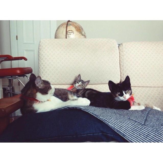 Photo of Twix Kitten