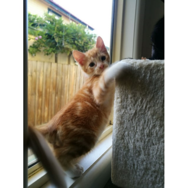Photo of Rohan (Meet Me At Vets On Parker   Templestowe)